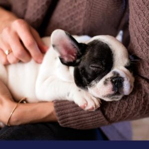 puppy vaccinations
