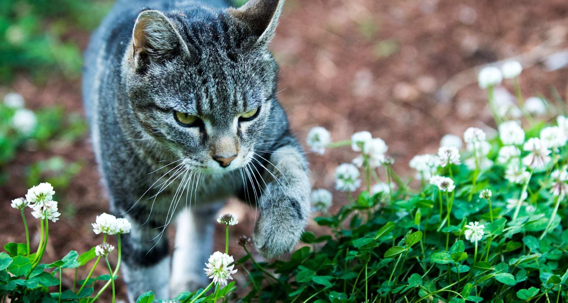 Cat Routines