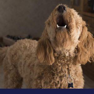 restrain dog barking