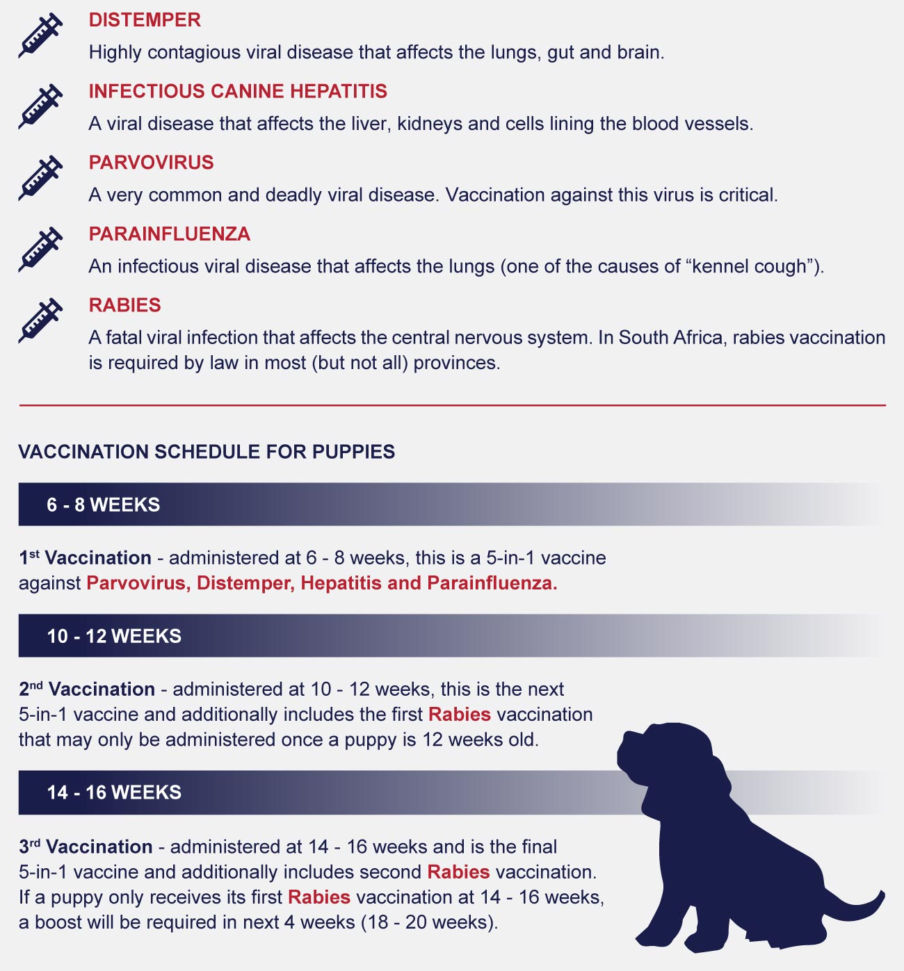 dont miss vaccinations- basics of puppy vaccinations