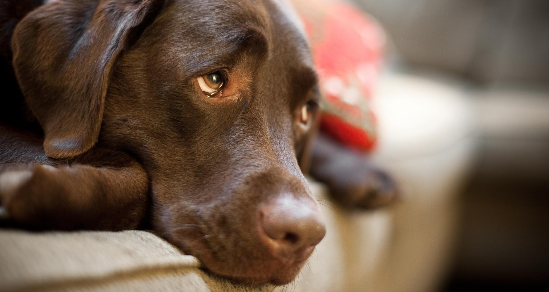 What to do during a dog seizure