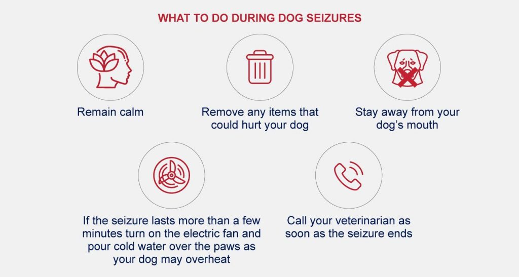 What to do during dog seizures