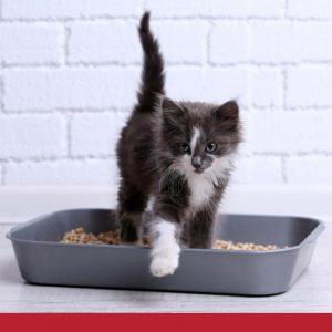 Raising and Training kittens