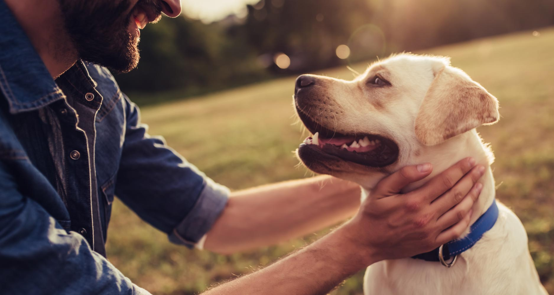Epilepsy and seizures in dogs